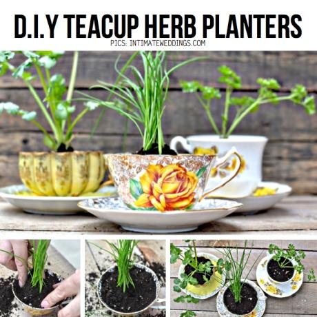 teacup-planters